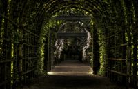 Hidden Garden 2020
