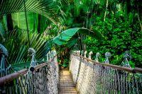 Jungle Festival 2020